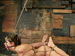 Punishment Pictures -  Sasha Sparks cums and cums again begging for it to stop