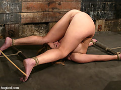 Bondage Pictures -  Beauty meets Hogtied as Isabella Soprano is tied and tickled.